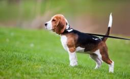 Un chien en bonne santé : un chien assuré !
