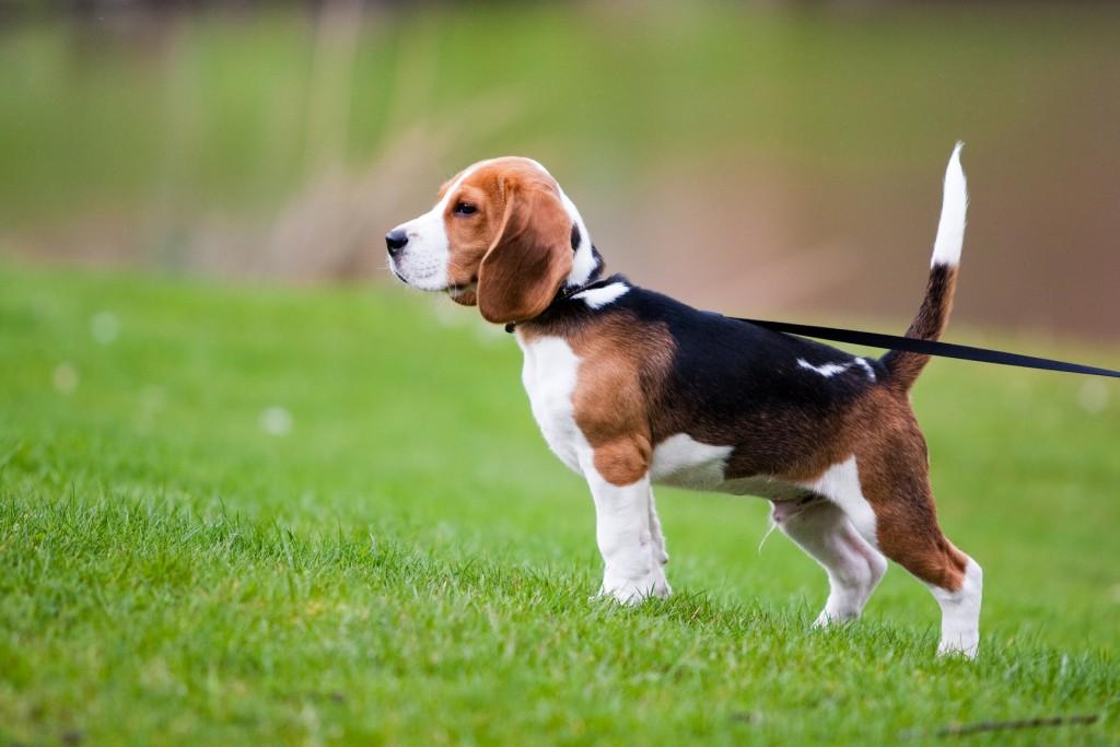 Chien assuré, chien en bonne santé